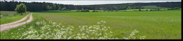 Frühjahr bei Dangersen (c) Torsten Penshorn