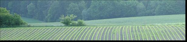 Feld im Frühjahr (c) Torsten Penshorn